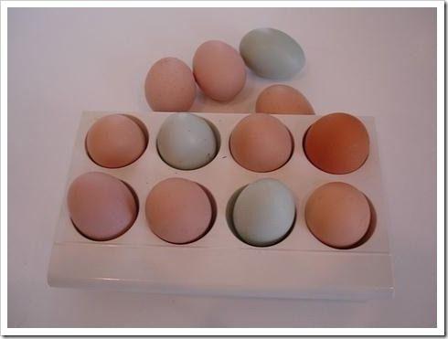 trazabilidad-huevos