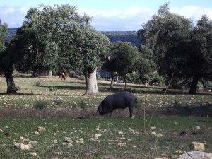 Norma de Calidad para la carne, el jamón, la paleta y la caña de lomo ibérico